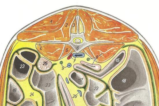 2012_Sept_7_8_cross_section_at_L4_equine.jpg