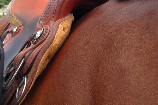 2015 May 15 9 saddle on horse.jpg