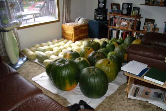2013_May_21_9a_Squash_and_pumpkins_2007.jpg