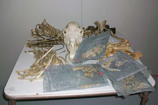 2011_Oct_4_1_table_of_bones.jpg
