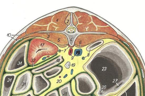 2012_Sept_7_9_cross_section_at_L2_equine.jpg