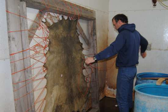 2011_Dec_12_4_removing_deer_hide_from_frame_DSC_6866.jpg