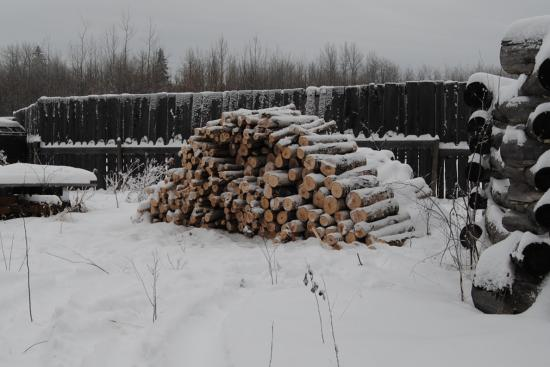 2012_Nov_24_5_birch_firewood.jpg
