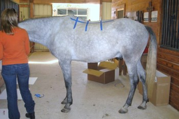 2014 May 6 6 larger horse with longer back.JPG