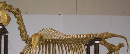 2012_Feb_10_1_equine_spine.jpg