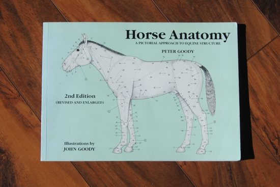 2016 April 18 11 Goodys Horse Anatomy.jpg