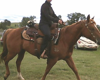 2015 June 30 30a wrong saddle position.jpg