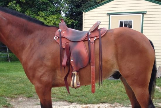 2015 May 15 16 saddle in place.jpg