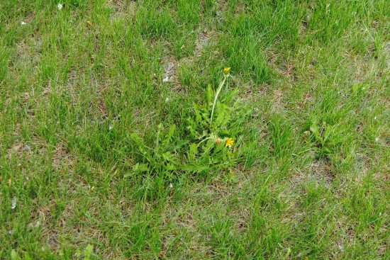 2013_May_21_7_faster_growing_weeds.jpg