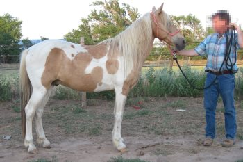 2014 May 6 5 small horse with short back.JPG