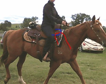 2015 June 30 30b wrong saddle position.jpg